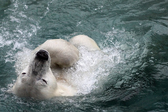 Lesniara Victoria, Out For A Swim