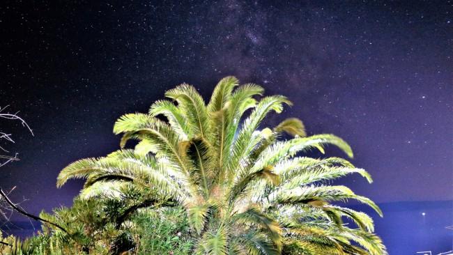 Matyas Stverteczky, Stars With Palme Tree