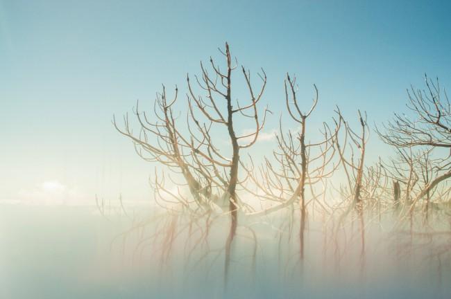 Mireles Jesus, Roots