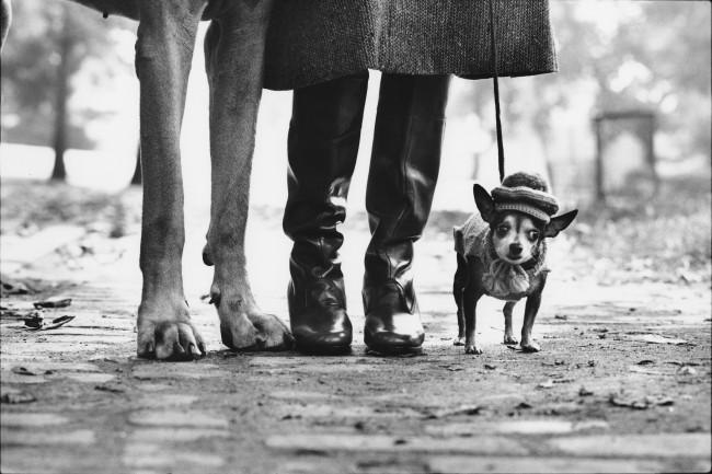Elliott Erwitt, Dog Legs. USA, New York City, 1974
