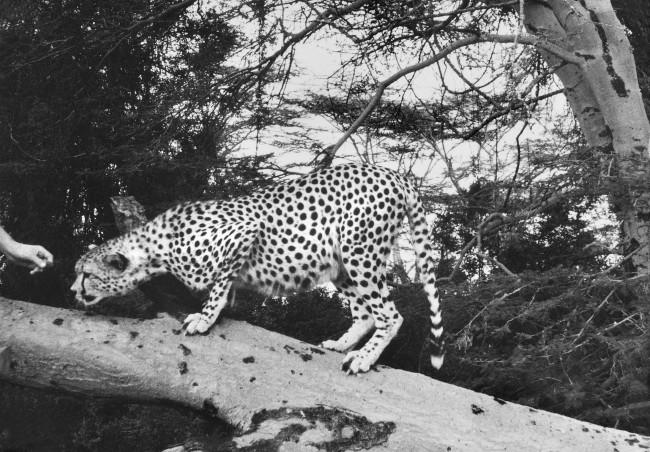 """Imer Guala, fotografia in bianco e nero. A Mantova, la mostra """"Imer Guala. Taccuino di viaggio. Memorie e segni d'Africa 1958"""""""