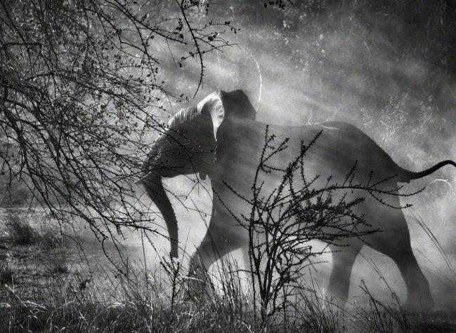 © Sebastião Salgado/Amazonas Images/Contrasto, Kafue National Park, Zambia, 2010. Genesi è l'ultimo grande lavoro di Sebastião Salgado, il più importante fotografo documentario del nostro tempo