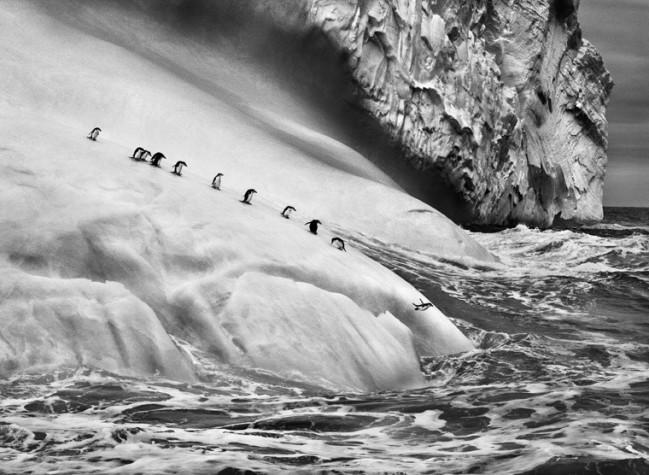 © Sebastião Salgado/Amazonas Images/Contrasto, Isole South Sandwich, 2009. Genesi è l'ultimo grande lavoro di Sebastião Salgado, il più importante fotografo documentario del nostro tempo