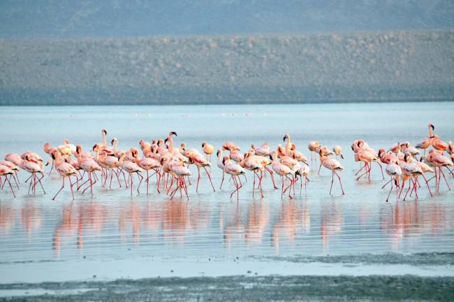Lago Abbè, Gibuti. Africa orientale. Ecco la TOP 5 di Best in Travel delle mete turistiche da scoprire in questo 2018.