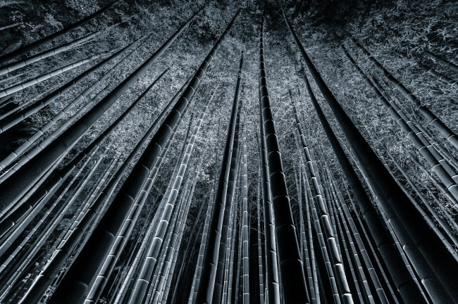 Bamboo Forest Fine Art Photography by Takeo Hirose